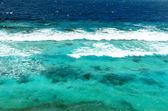 tropické moře