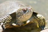 Fotografie Tortoice