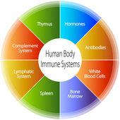 Emberi test immunrendszerű diagram