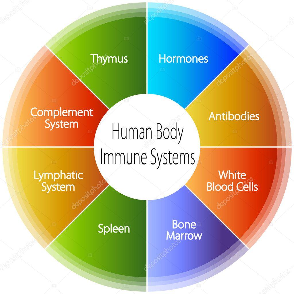 Human Body Immune Systems Chart