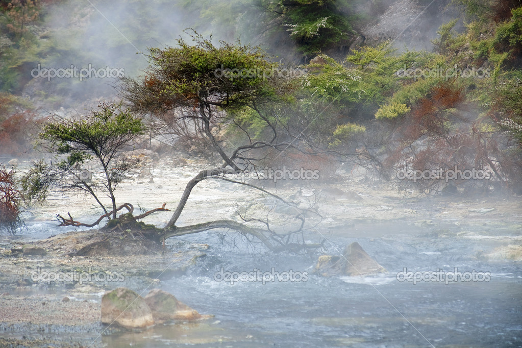 Geysers and hot springs are located in many places around Rotorua