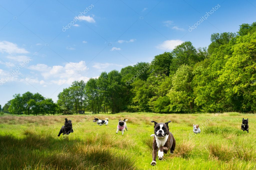 Happy dogs romping in a field