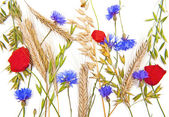 Photo Flowers and cereals