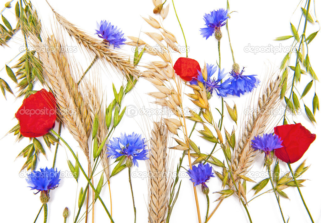 Flowers and cereals