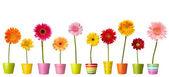 Fotografie Květináč přírodní zahradní botaniky sedmikráska květ