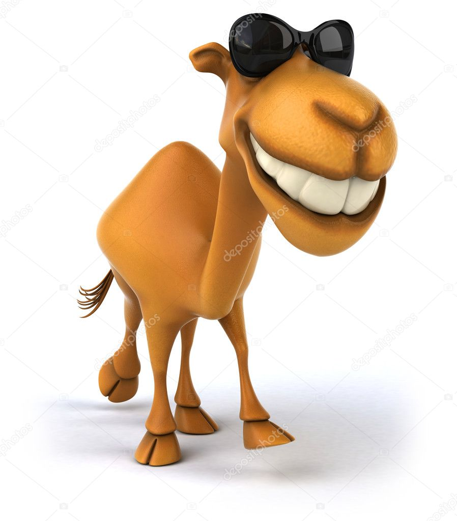 fun camel u2014 stock photo julos 11556525