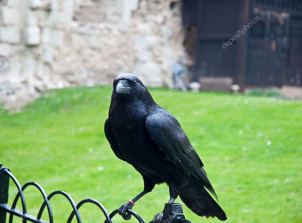 Κάστρο μεγάλο μαύρο πουλί