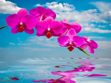 Beautiful orchids .
