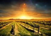 Fotografie nádherný západ slunce vinice
