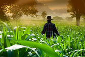 Fotografia donna agricoltore camminando nei campi di mais al mattino presto