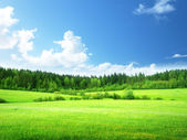 Photo Field of grass and perfect sky