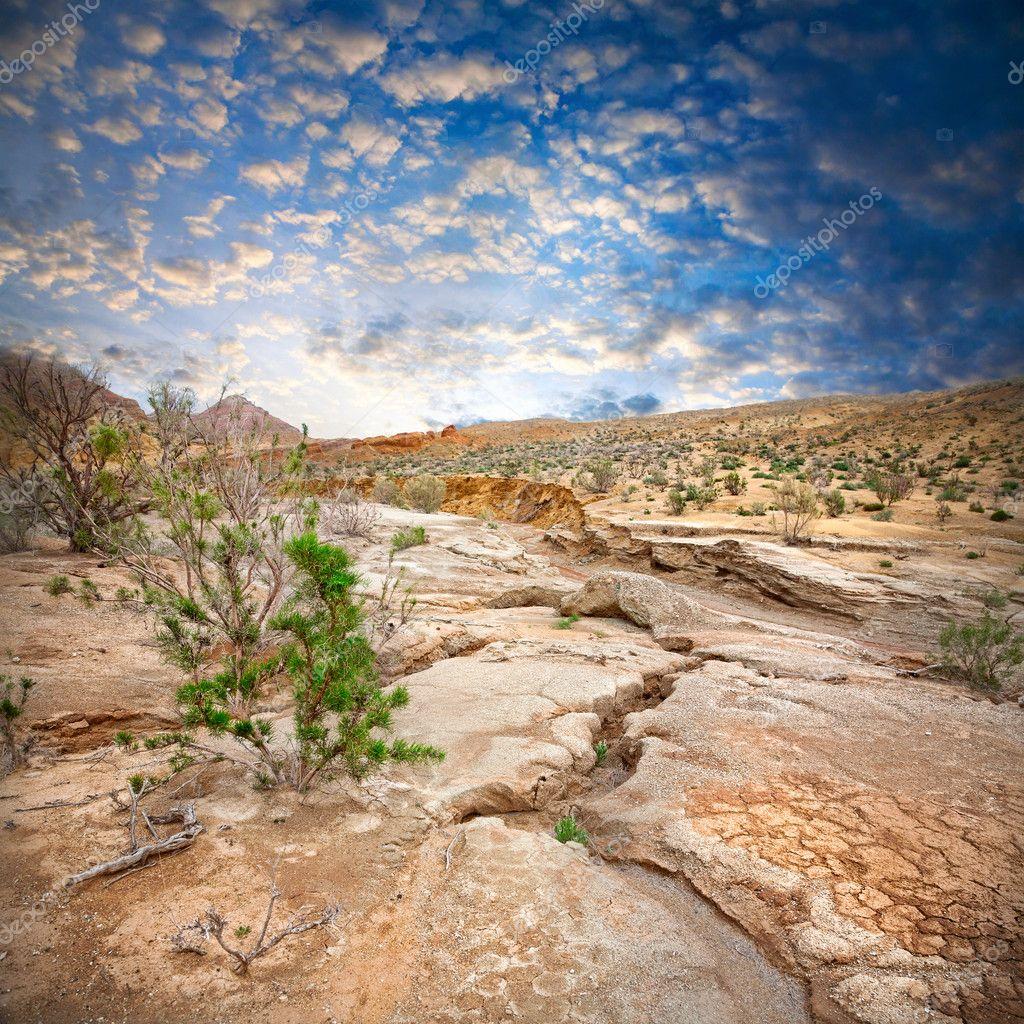 Semi desert scenery
