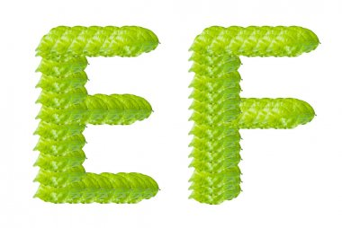 Green leaf E and F alphabet character.