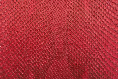 Crocodile red bone skin texture background.