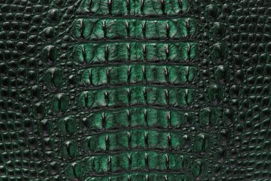 Crocodile bone skin texture background.