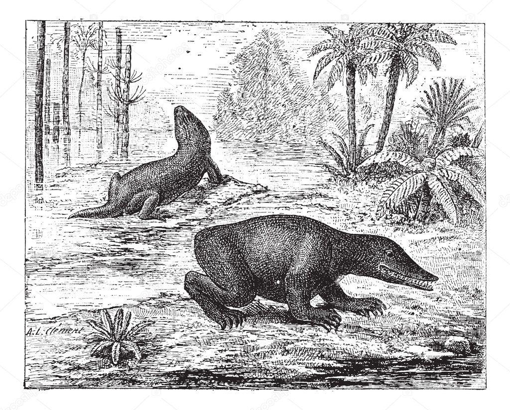 labyrinthodon または迷歯亜綱、...