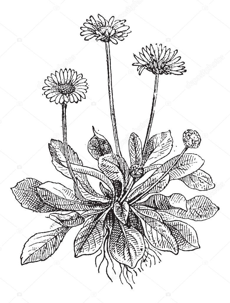 Art Of Floral Design Ennis