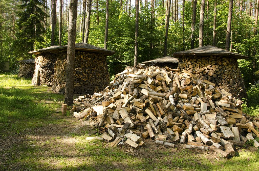 Pile of chopped stack firewood wood forest trees