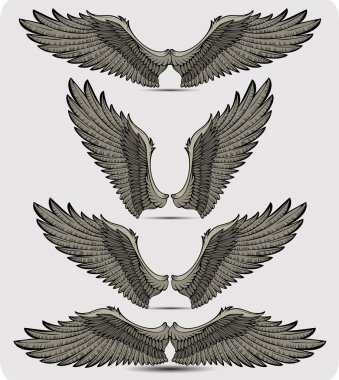 Wings set. Vector illustration.