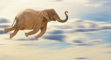 Flying Elephant, Outdoor stock vector