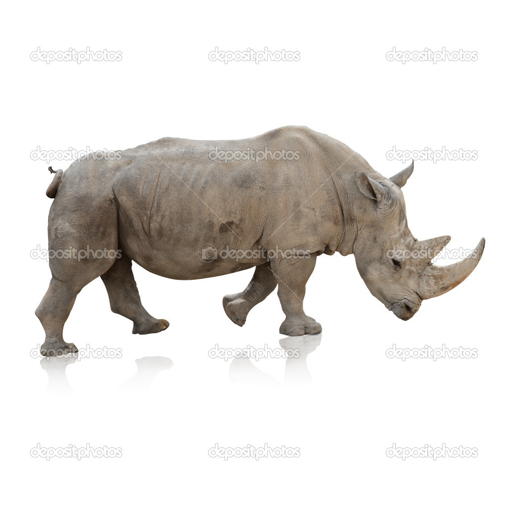 Potrait Of A Rino