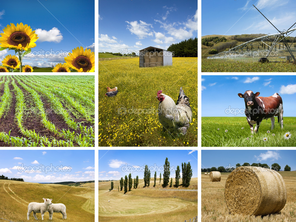 Agricultural concepts collage