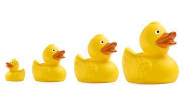 Yellow toy duckling on white background