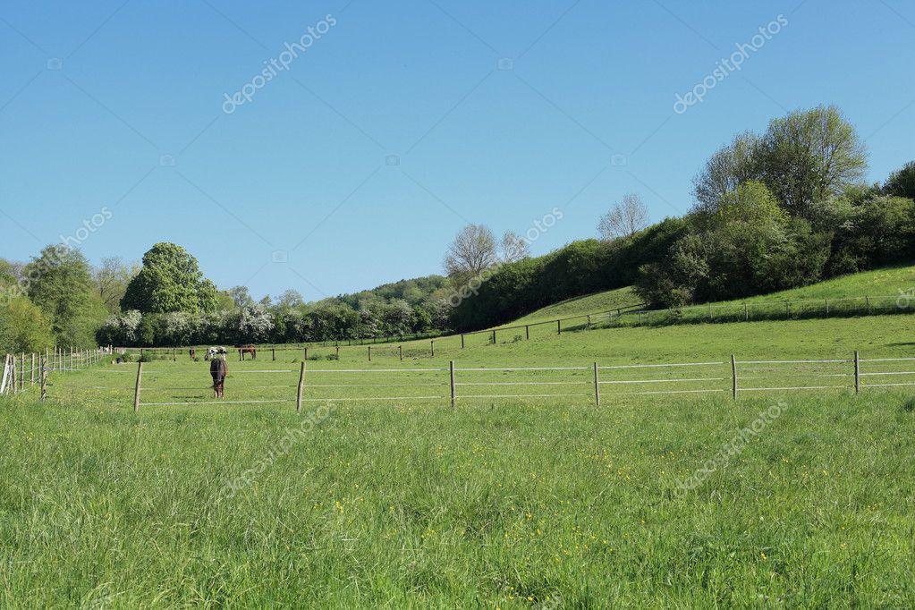 Paysage de campagne ensoleill e avec des chevaux au printemps photographie chretien 11477812 - Taille des rosiers au printemps ...