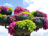 Outdoor planters with flowers