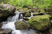cascata foresta profonda