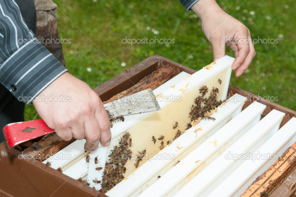 apiculteur 77