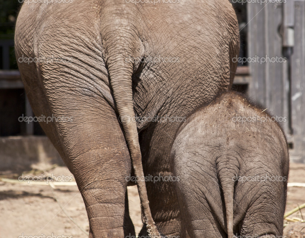 Elephant adults only, ali larter blowjob