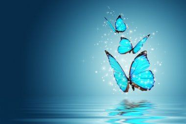 Blue Magic butterfly over water stock vector