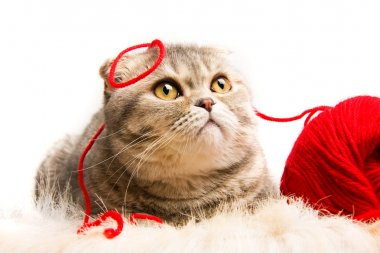 Funny kitten with a ball of red yarn on white background