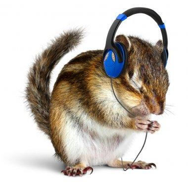 Funny chipmunk listening to music on headphones