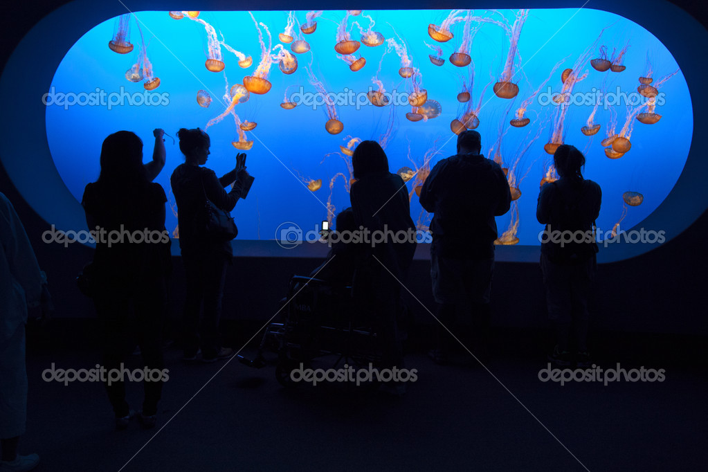 watch the jelly fishes in the aquarium