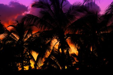 Palmtrees silhouette on sunset in tropic