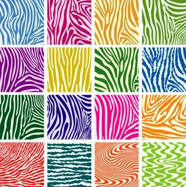 Vector colorful skin textures of zebra
