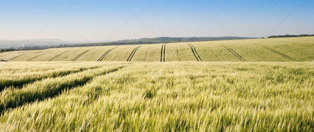Campo di grano all 39 alba nel paesaggio della campagna for Piani di campagna inglese