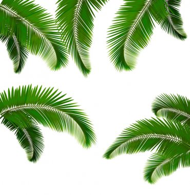 Set of palm leaves on white background