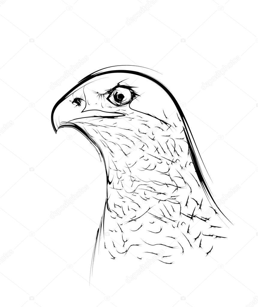 Orzel Ptak Stylizowane Jako Rysunek Ołówkiem Grafika Wektorowa