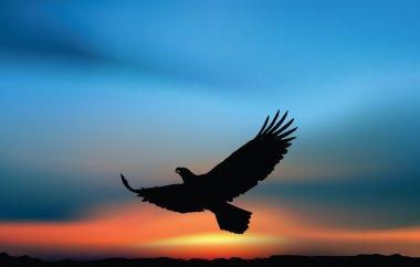Hawk at the sunrise