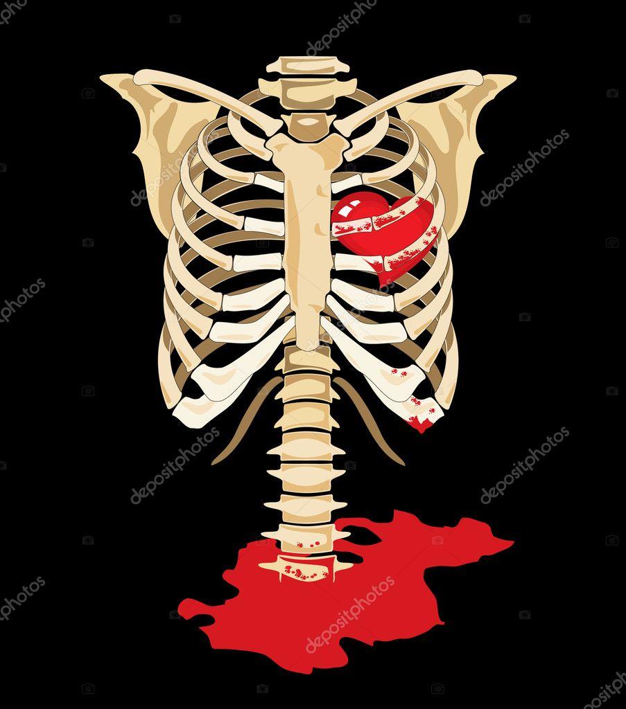 Vector. Red heart inside of skeleton