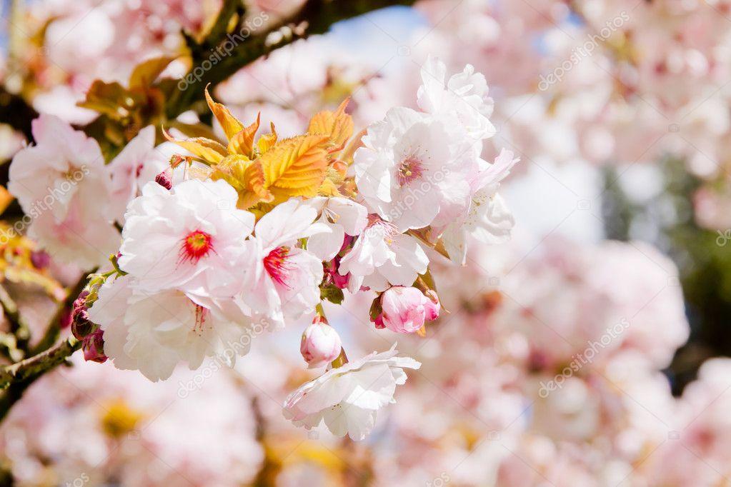 schönen Sommer blühen Baum — Stockfoto © pab_map #11377837