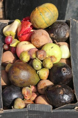Dying and decaying fruits in a box as garbage