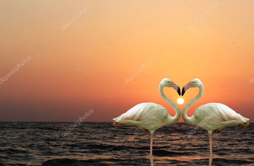 Beautiful and romantic flamingo couple enjoying together at a be