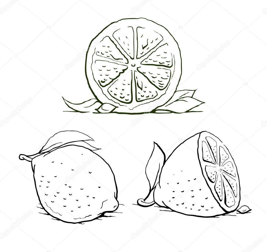 Ripe lemon with leaf. vintage set.