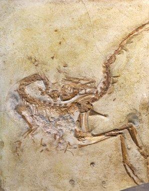 Fossil embedded in stone Rock