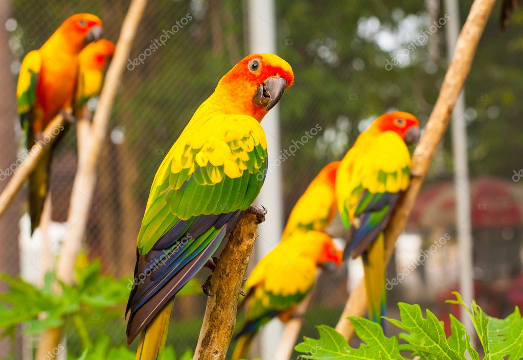 Parrots are seatting on the branch