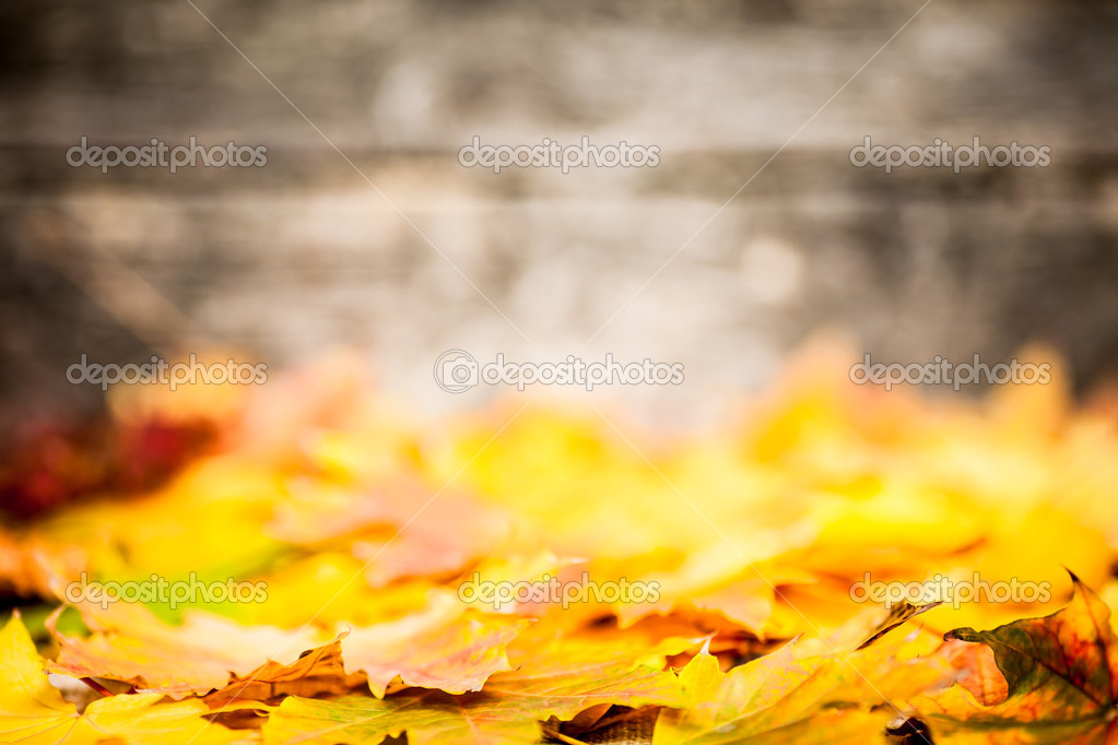 Autumn border from yellow leaves